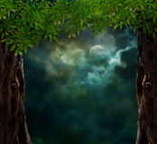 Fabulous night scenery, ancient trees Stock Photography
