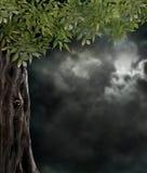 Fabulous night scenery, ancient trees Stock Photos