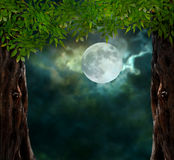 Fabulous night scenery, ancient trees Royalty Free Stock Photography