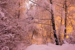 Fabulous night winter forest in the snow. Winter time. Heavy snowfall. Trees in the snow. Beautiful landscape. The trunks and bra stock photography