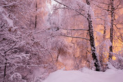 Fabulous night winter forest in the snow. Winter time. Heavy snowfall. Stock Photos