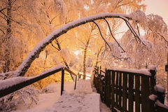 Fabulous night winter forest in the snow. Winter time. Heavy snowfall. Stock Image