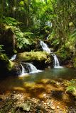Fabulous Onomea Falls located in Hawaii Tropical Botanical Garden on the Big Island of Hawaii. USA Royalty Free Stock Image