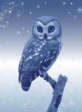 Fabulous owl Stock Photography