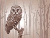 Fabulous owl Stock Image