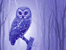 Fabulous owl Stock Images