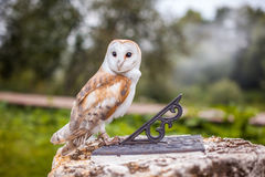 Fabulous owl sitting on the sundial. Symbol of wisdom and magic Royalty Free Stock Images