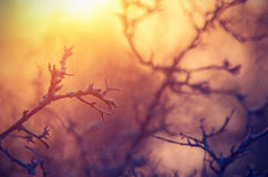 Fabulous picture in the form of tree branches at dawn and sunlig Stock Photography