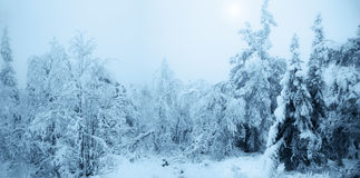 Fabulous snow-covered forest. Fairy Tale Forest covered with snow. Finnish Lapland Royalty Free Stock Photo