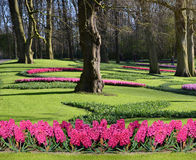 Fabulous spring landscape with hyacinth flowers in the park Keuk Royalty Free Stock Photos