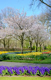 Fabulous spring landscape with hyacinth flowers in the park Keuk Stock Photography