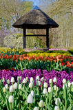 Fabulous spring landscape with tulips in the park Keukenhof, Hol Stock Images