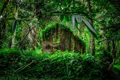 Fabulous thrown house in a tropical forest, Bali lifstyle stock images