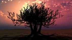 Fabulous tree against a beautiful sunset Royalty Free Stock Images