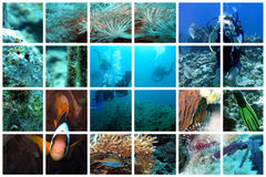 Fabulous underwater collage. Beautiful views of divers and underwater life on a huge lattice collage Stock Images