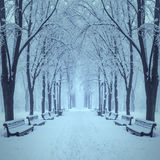 Fabulous winter city park Royalty Free Stock Images