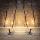 Fabulous winter city park Royalty Free Stock Photos