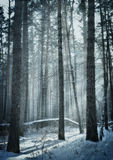 Fabulous winter forest Stock Photography