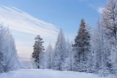 Fabulous winter forest Royalty Free Stock Photos
