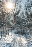 Fabulous winter forest, snow-covered roads, trails, winter landscape Stock Image