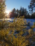 Fabulous winter forest stock photos