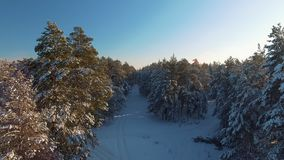 A fabulous winter view of a pine forest and trees covered with snow. Forest path between the trees. Difficult forest with deep snow. Siberian winter nature stock footage