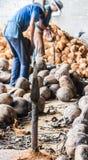 Faca de aço para cocos de rachadura Foto de Stock