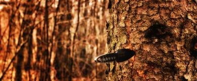 Faca de jogo na árvore Imagem de Stock