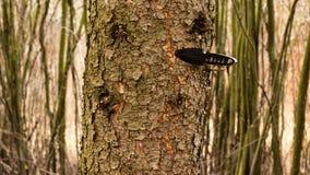Faca preta jogada em uma árvore Imagem de Stock