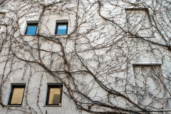 Facade with climbing plant Royalty Free Stock Photography
