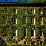 Facade covered with ivy Stock Photo