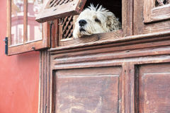 Facade detail los llanos la palma dog window Stock Images