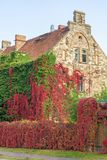 Facade greening with wild wine at an old house royalty free stock image