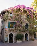 Facade of house in center of Sirmione with flowering pink bougainvillea. Royalty Free Stock Photography