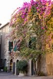Facade of house in center of Sirmione with flowering pink bougainvillea Stock Photos