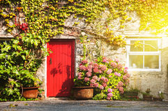 Facade of a house in Galway, Ireland. Sunlight through the window and red door. Plant on the wall Stock Images