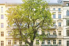 Facade of an old house with a tree. In front royalty free stock photo