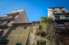 Facade with overgrown ivy. Facade of abandoned flat with overgrown ivy plants royalty free stock photos