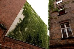 Facade of a palace in Berlin covered with the green af a climbing plant stock photography