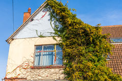Facade semicovered with ivy. English houses are simple but interesting their simplicity Stock Image