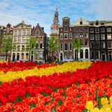 Facades of old houses ,  Amsterdam, Netherlands. Tulips and  facades  of old houses in Amsterdam, Netherlands Stock Image