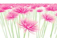 Faccia i raggi x dell'immagine di un fiore isolato su bianco, la dalia illustrazione vettoriale