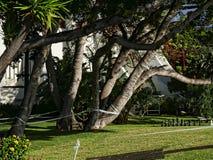 Faccia il giardinaggio in hotel cinque stelle a Funchal sull'isola del Madera nell'Oceano Atlantico immagini stock libere da diritti