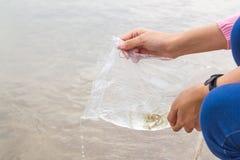 Faccia il merito liberando il pesce Immagine Stock