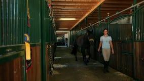 Faccia scorrere dentro sulla grande stalla con i lotti dei cavalli, donna che elimina il cavallo
