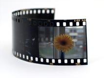 Faccia scorrere la pellicola Fotografia Stock Libera da Diritti