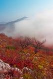 faccia un'escursione la montagna in sorella Primorskoi Territory Fotografie Stock