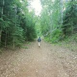 Faccia un'escursione nella foresta vicino a Calista, BC Fotografia Stock