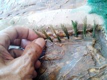 Faccia un modello di piantatura del riso Fotografie Stock Libere da Diritti