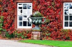 Facciata con le piante rampicanti colourful Fotografia Stock Libera da Diritti